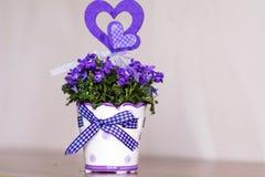 Beautiful purple  flowers in ceramic decorative pot Royalty Free Stock Photo