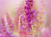 Beautiful purple flowers close-up Royalty Free Stock Image