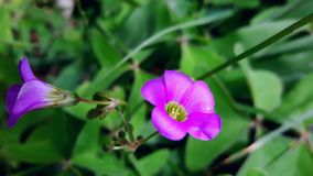 Purple small Flowers. Beautiful purple flowers among green plants. Nature background royalty free stock image