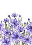 Beautiful purple flowers with green stems and leaves on white background. Seamless floral pattern. Watercolor painting. stock illustration