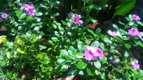 Beautiful purple flower in the garden. stock image
