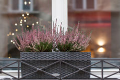 Beautiful purple flowers growing in a pot on a window from the s. Treet, beautiful bokeh in the window Stock Images