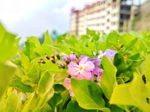 Beautiful purple flowers. natural beauty royalty free stock image
