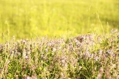 Beautiful purple flowers in nature Stock Photos