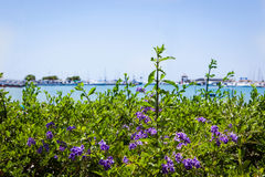 Beautiful purple flowers on sea view background Royalty Free Stock Photos