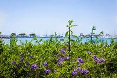 Beautiful purple flowers on sea view background. Alcudia, Mallorca Royalty Free Stock Photos