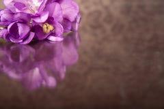 Beautiful purple freesia Stock Image