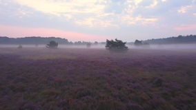 Purple heath overview stock footage