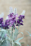 Beautiful purple lavender of artificial flowers Royalty Free Stock Photos