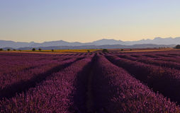 Beautiful Purple Lavender Field and yellow sunflower fields. Stretching all the way to distant mountains on the Plateau De Valensole, France stock image