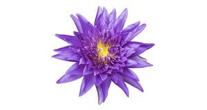 Beautiful purple lotus Royalty Free Stock Photography