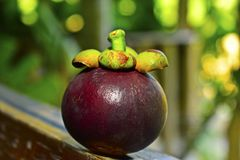 Beautiful purple mangosteen and mangosteen, beautiful color royalty free stock photos