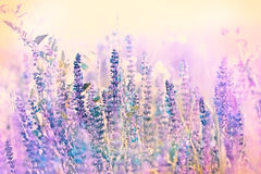 Beautiful purple meadow flowers Royalty Free Stock Images