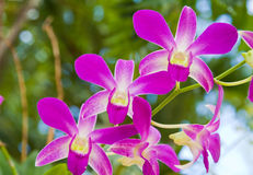 Beautiful purple orchid Stock Photography