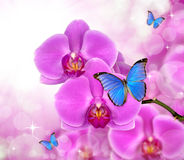 Beautiful purple orchid. With butterflies Morpho Stock Image