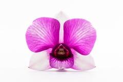 Beautiful purple orchid flower. Stock Photo