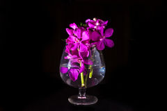 Beautiful Purple orchid flower on black Royalty Free Stock Images