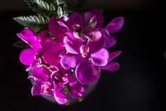Beautiful Purple orchid flower on black Stock Images