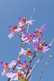 Beautiful purple orchid flower close up Stock Photography