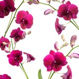 Beautiful purple orchid flower frame isolated on white backgroun royalty free stock images