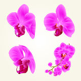Beautiful purple Orchid flowers closeup isolated vintage set second vector editable illustration Royalty Free Stock Photography