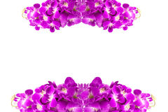 Beautiful purple orchid flowers cluster isolated on white backgr Stock Images