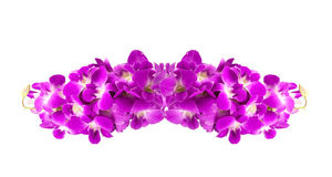 beautiful purple orchid flowers cluster  on white backgr Royalty Free Stock Images