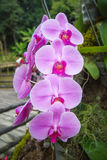 Beautiful purple orchid. Beautiful purple orchid in a garden Royalty Free Stock Photography