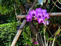 Beautiful purple orchid. Stock Image