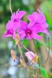 Beautiful purple orchid Stock Image