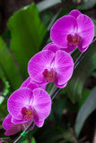 Beautiful purple orchid on green background. Close-up view Stock Images
