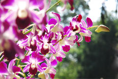 Beautiful purple orchid. Group of beautiful purple orchid Stock Photography