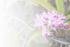 Beautiful purple orchid on light filters background Stock Photo
