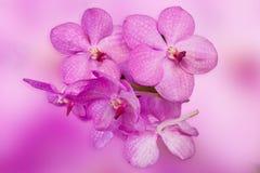 Beautiful purple orchid phalaenopsis on natural background Stock Photo