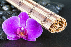 Beautiful purple orchid, rocks and water droplets. stock photo