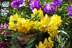 Beautiful purple orchid Stock Photography