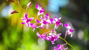 Beautiful purple Orchid waving in the wind. Summer vacation concept. stock video footage