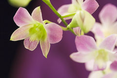 Beautiful purple orchids Stock Photos