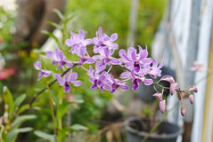 Beautiful purple orchids with blur background in the garden selective focus Stock Image