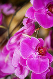 Beautiful purple orchids flowers Stock Image
