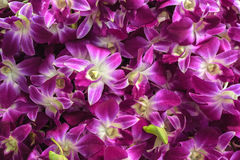 Beautiful purple orchids natural background. Flower market at Bangkok, Thailand. Selective focus Stock Images