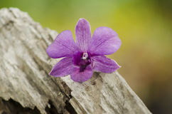 Beautiful purple orchids on a tree stump.  royalty free stock photography