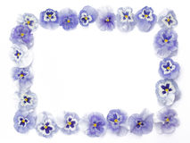 Beautiful purple pansies arranged in a square, isolated, on whit stock photo