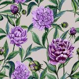 Beautiful purple peony flowers with green leaves on beige background. Seamless floral pattern. Watercolor painting. Hand painted illustration. Can be used as a Stock Images