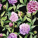 Beautiful purple peony flowers with green leaves on black background. Seamless floral pattern. Watercolor painting. Hand drawn illustration. Can be used as a Stock Image