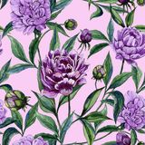 Beautiful purple peony flowers with green leaves on pink background. Seamless floral pattern. Watercolor painting. Hand painted illustration. Can be used as a Stock Photography