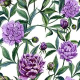 Beautiful purple peony flowers with green leaves on white background. Seamless floral pattern. Watercolor painting. Hand drawn illustration. Can be used as a royalty free illustration