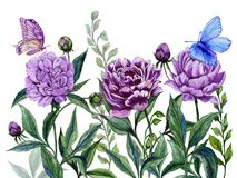 Beautiful purple peony flowers on a stems with green leaves and bright butterflies sitting on them. Isolated on white background. Watercolor painting. Hand Royalty Free Stock Photos