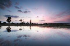 Beautiful purple sunrise on lake Stock Photography