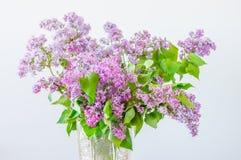 Beautiful purple Syringa vulgaris flowers.  royalty free stock photos